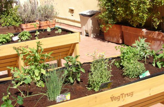 Community vegetable gardens