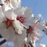 podar arboles, frutales y arbustos