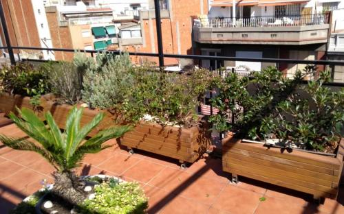 Terraza soleada con plantas resistentes a la sequía