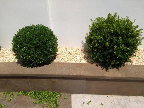 Poda de plantas perennes