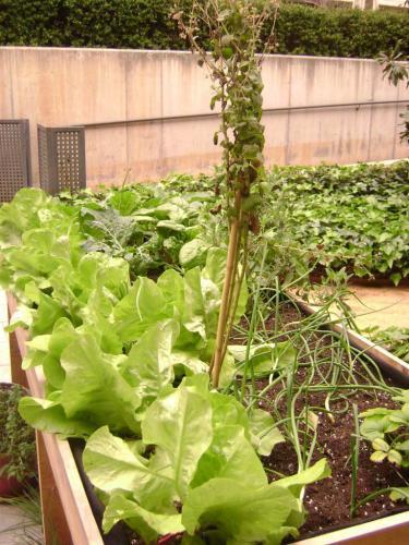 Cultivos creciendo