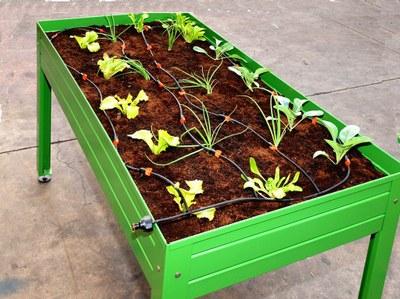 Cultiva en casa