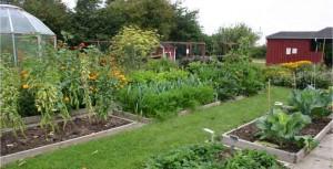 Huerto en el jardín