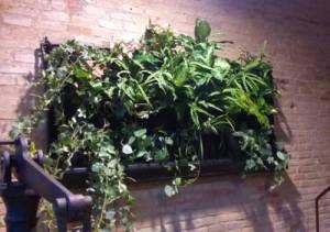 Instalación de jardín vertical con plantas de interior en la pared de un hotel en Barcelona
