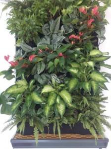 Jardin vertical interior con plantas de sombra