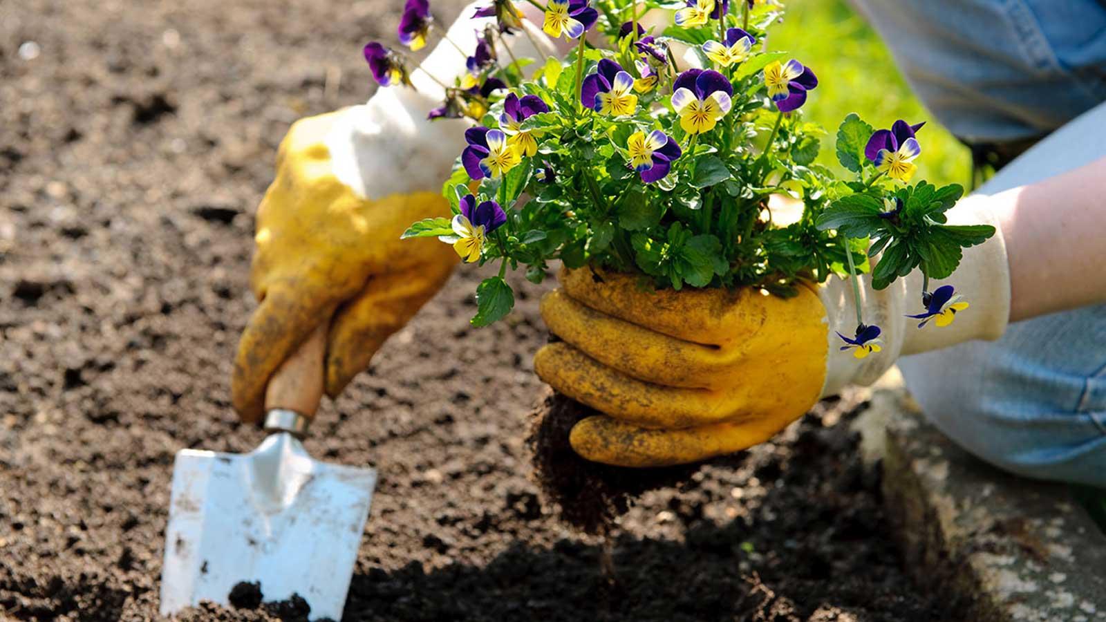 Veggie Gardening Tips