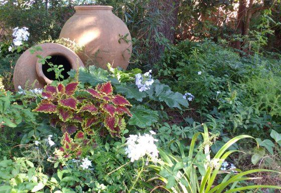 Jardin de sombra