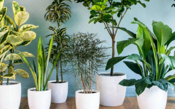 Plantas de interior en oficinas y hoteles