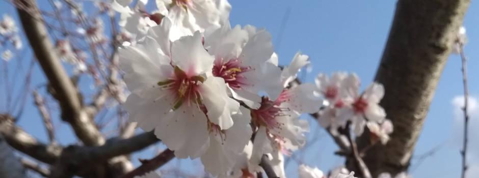 Poda de árboles frutales setos y arbustos